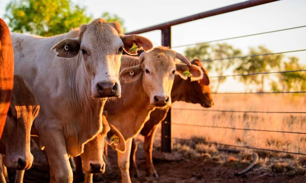 Dairy Entrepreneurship Development Scheme