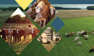 National Livestock Mission