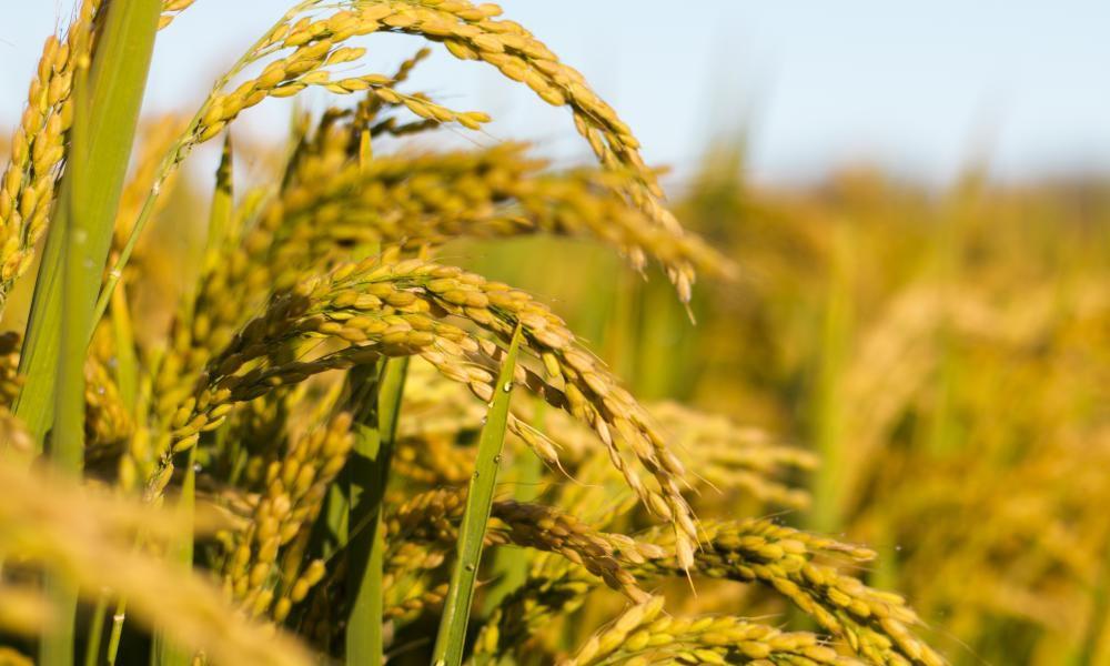Kharif Crops