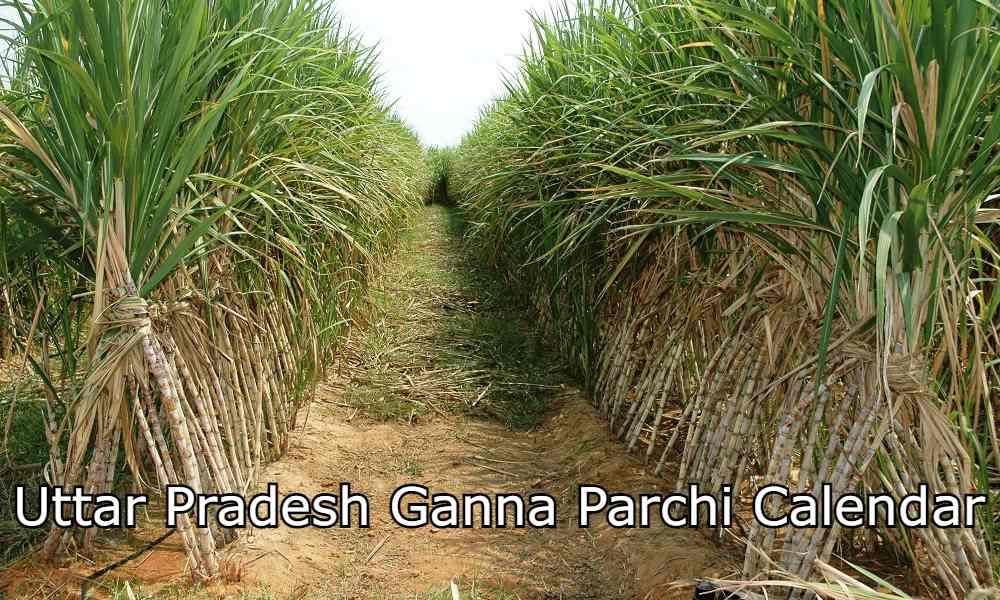 UP Ganna Parchi Calendar